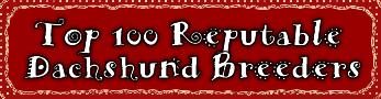 Reputable Dachshund Breeders: Top 100